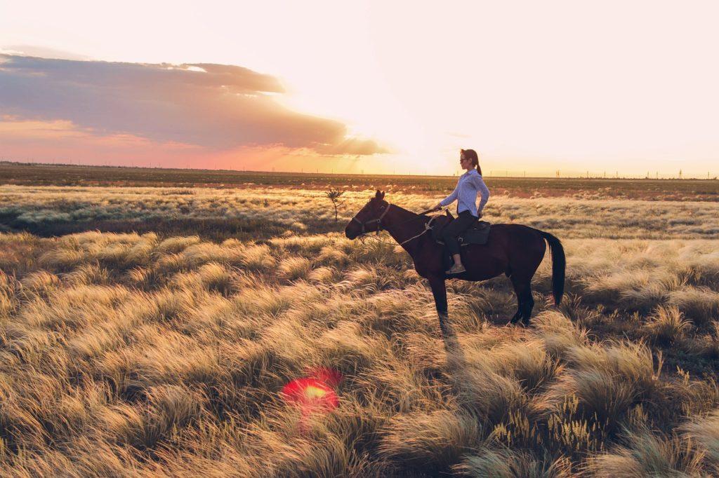 конная прогулка в подарок